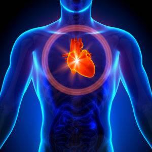 При длительном застое желчи в желчном пузыре у человека развиваются сердечно-сосудистые заболевания