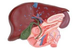 Диффузные изменения желчного пузыря